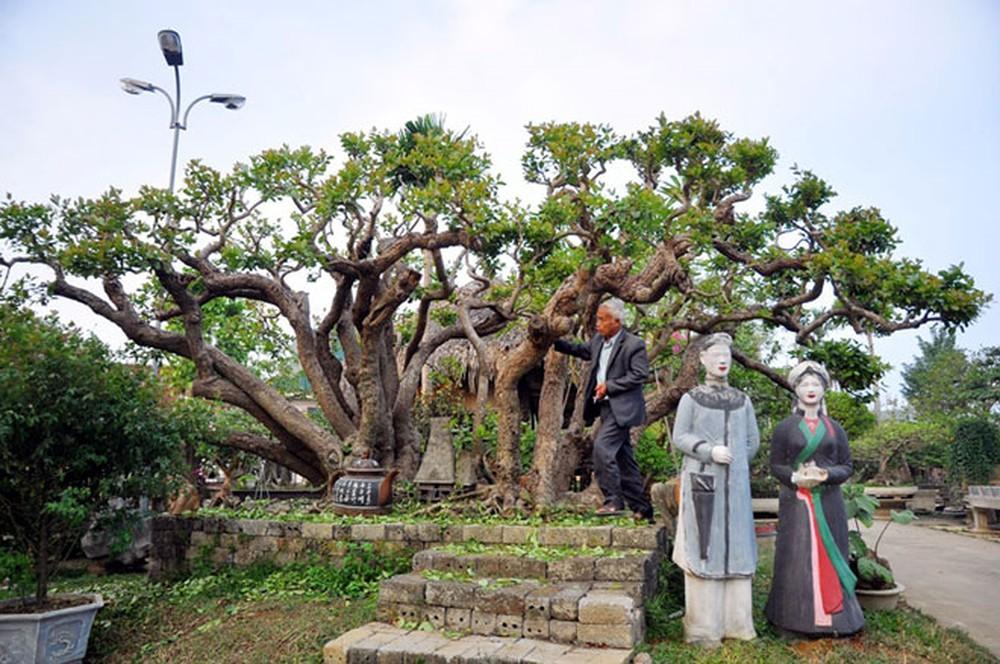 cây-canh-dat-nhat-viet-nam-4