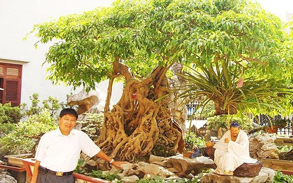 cây-canh-dat-nhat-viet-nam-1
