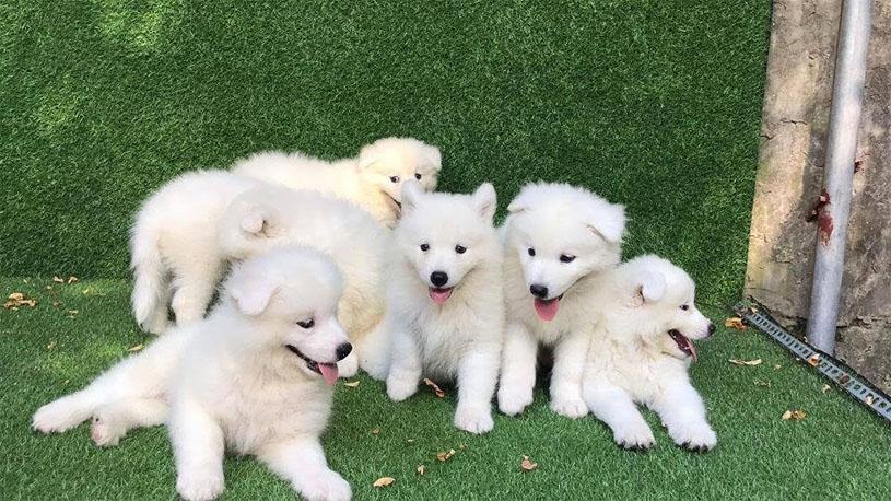 mơ thấy chó 4