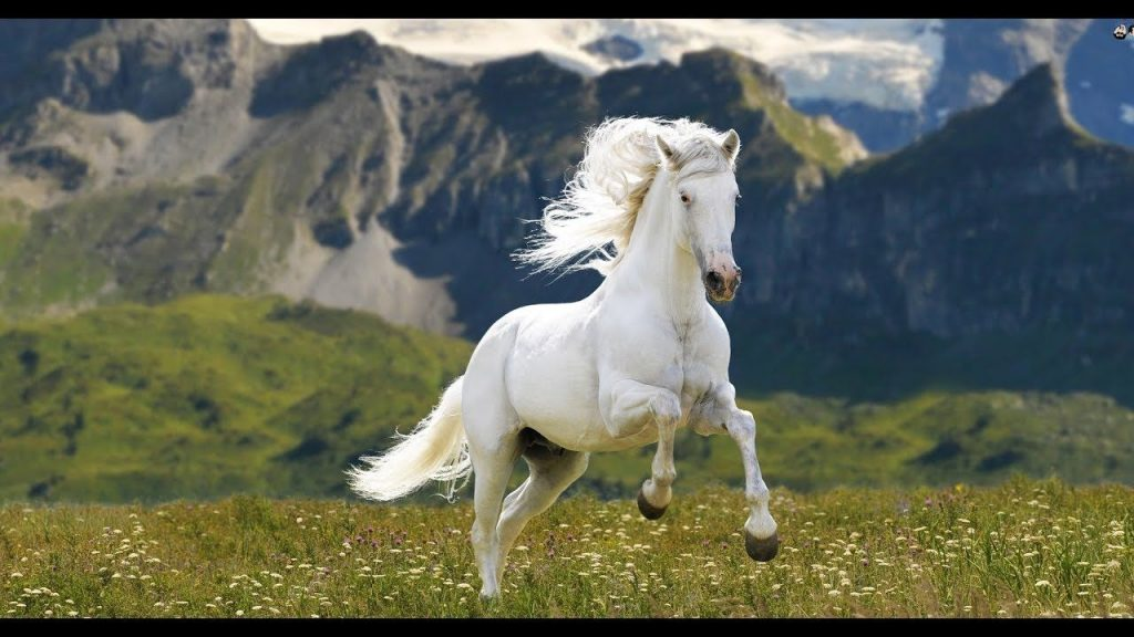 nằm mơ thấy ngựa đánh con gì 1