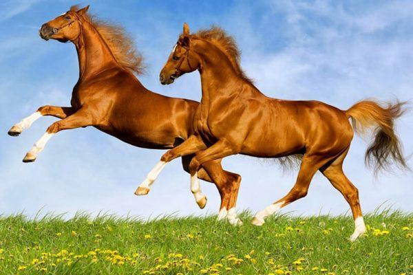 nằm mơ thấy ngựa đánh con gì 3