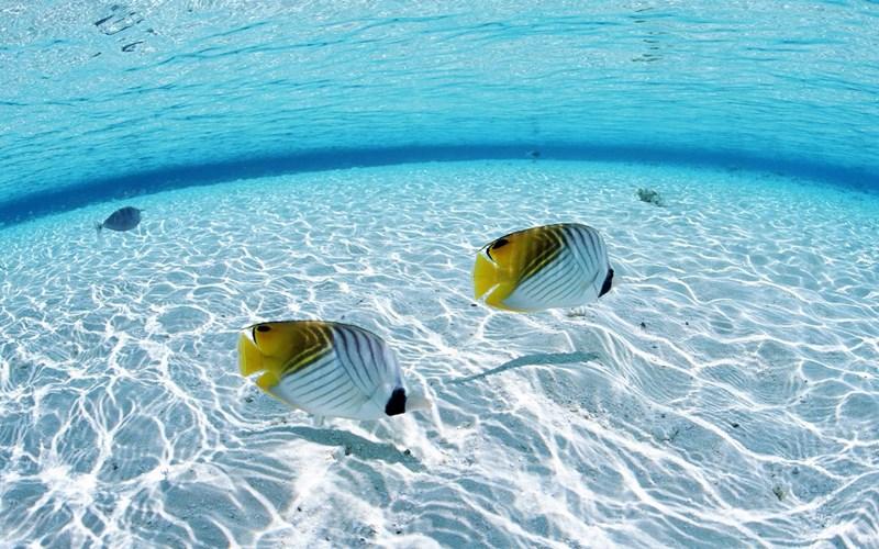 nằm mơ thấy cá và nước