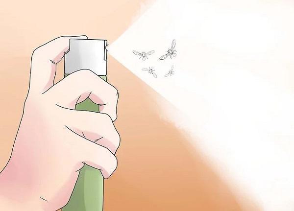Cách đuổi kiến cánh ra khỏi nhà