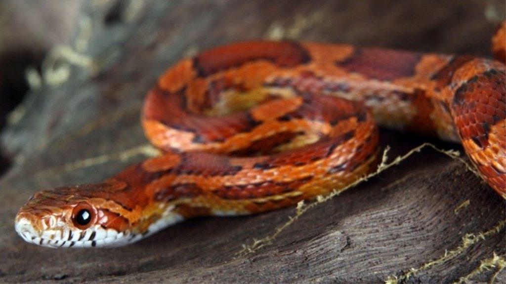 rắn vào nhà điềm báo gì