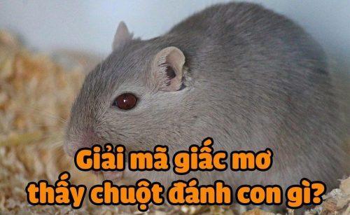 Mơ thấy chuột đánh con gì