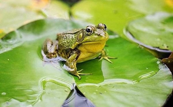Con ếch số mấy
