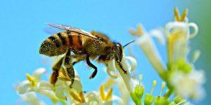 Con ong số mấy