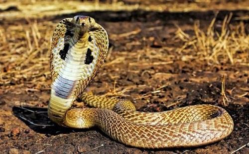 gặp rắn đánh con gì